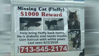 Local business goes all out in search for missing cat, from posters to&hellip&#x3b;