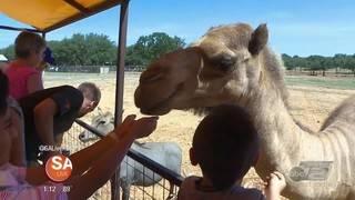 Wild Wednesday: Exotic Resort Zoo