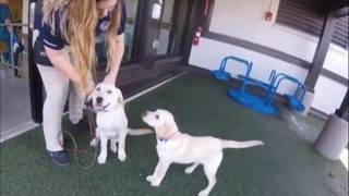New Orleans hospital helps train pups for patients, veterans