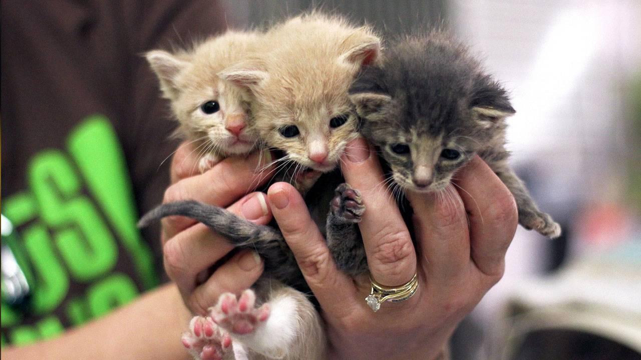sa-pets-alive-kittens_1554232720327.jpg