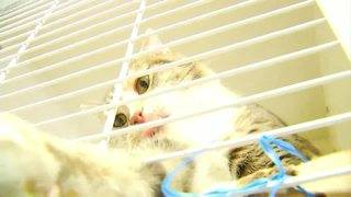 Pets in Montgomery County looking for love and good homes