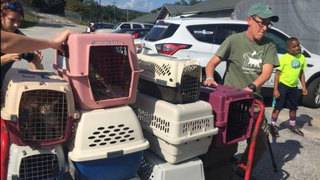 Angels of Assisi receiving 140 cats, dogs from Florida after Irma