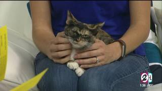 Help Local Animals In Need