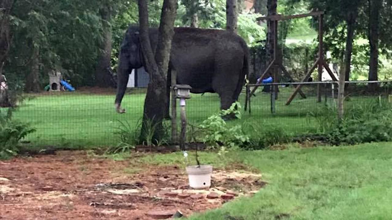 Elephant in Baraboo 3.jpg41441507