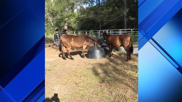 Mules stolen in West Miami-Dade