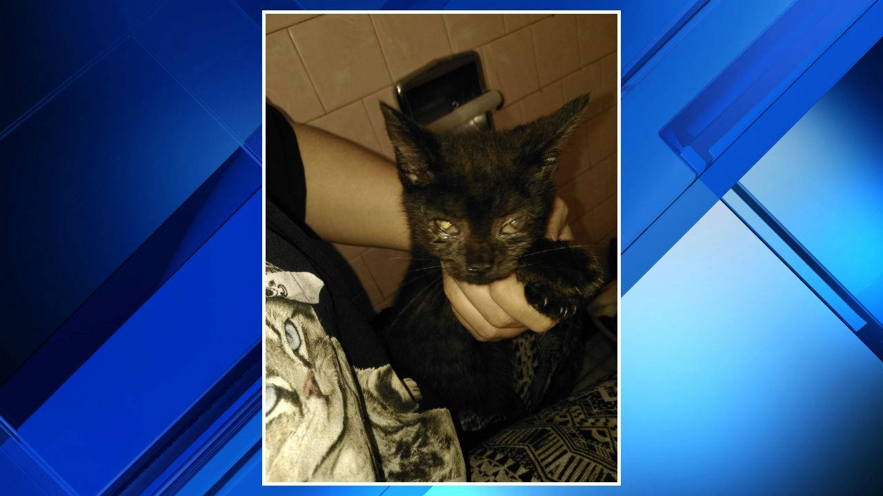 Cats rescued from Southwest Detroit home 1