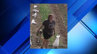 UF police ask for help identifying woman