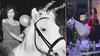Horse stunts at Miami Beach clubs appear to be inspired by famous Studio&hellip&#x3b;