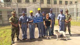 Rehabilitation boot camp pairs inmates with dogs