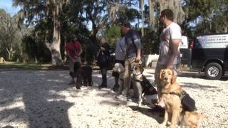 Study shows how service dogs may provide benefits for veterans with PTSD