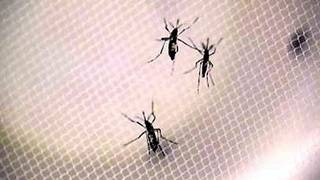 First sexually transmitted Zika virus case in Florida reported for 2017