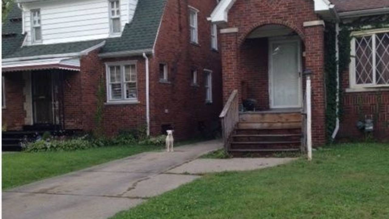 stray-dog-image-1.jpg_22057740