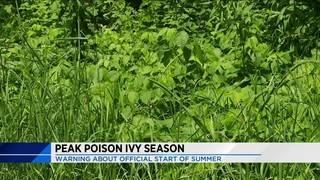 Peak Poison Ivy Season