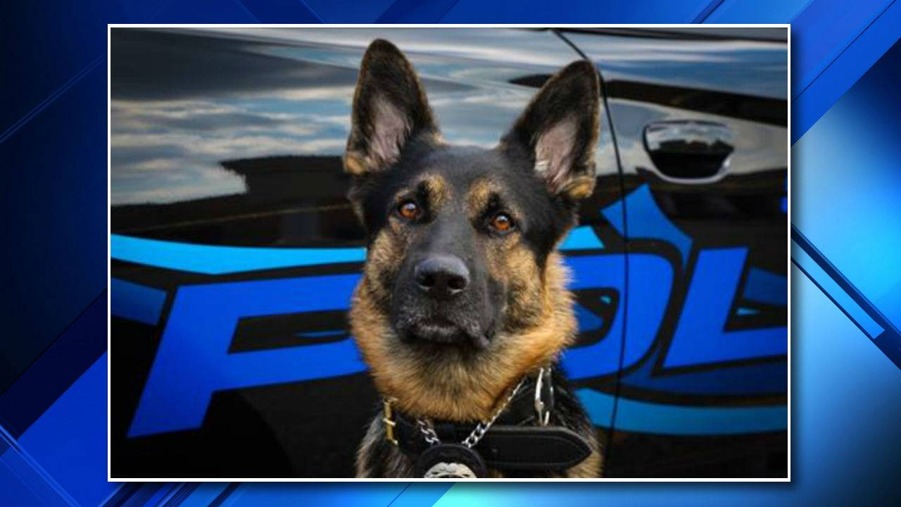 axe k-9 unit shooting st clair shores
