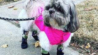 Introducing the new hot trend: Leggings for your dog