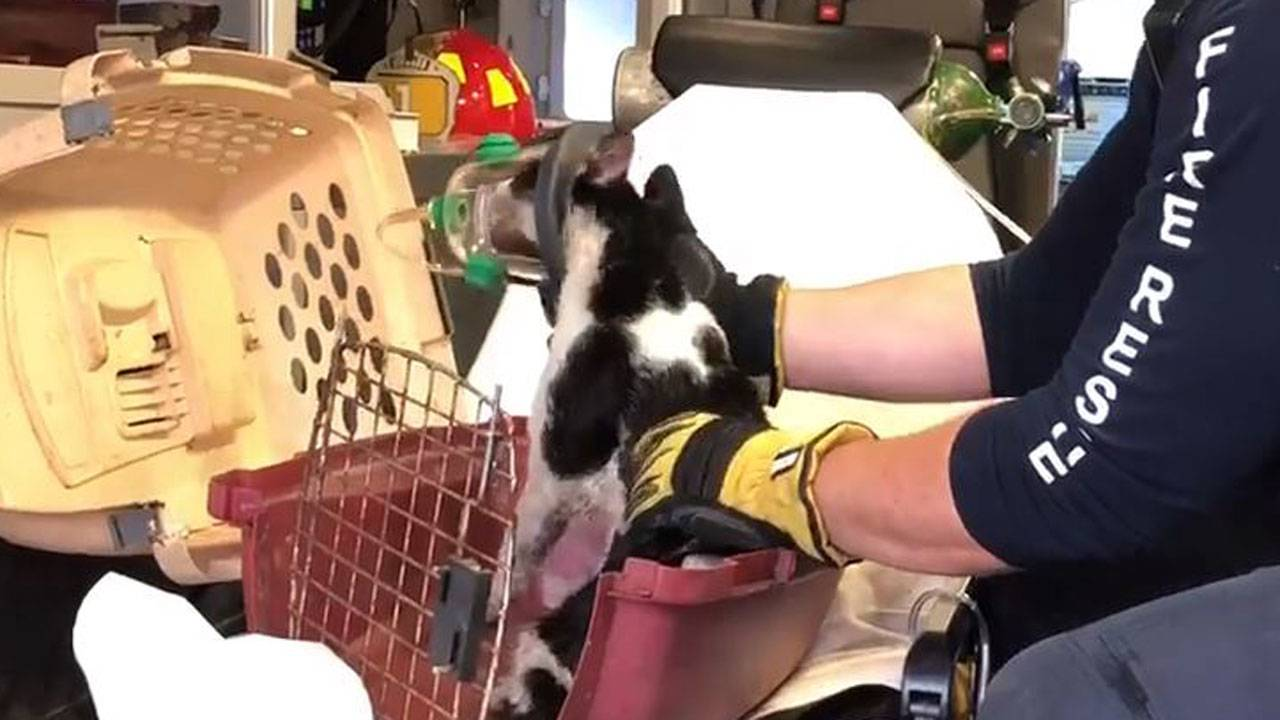 Cats rescued from Dania Beach fire