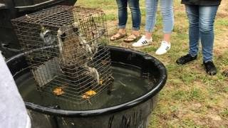 Ocala teacher accused of drowning raccoons with students during class