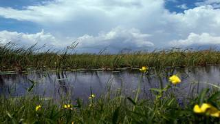 Hit by a hurricane, Everglades National Park adapts to changing climate