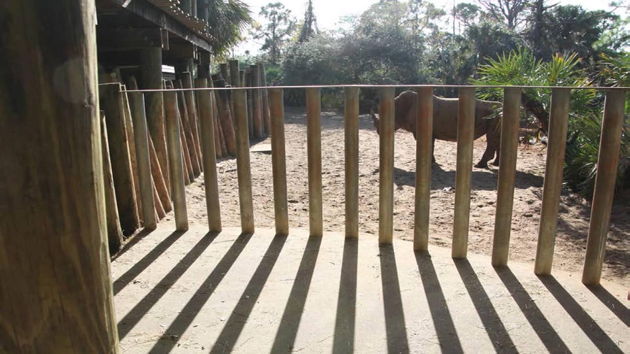 brevard zoo rhinos 2_1548886219557.png.jpg