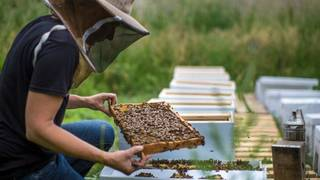Ford adds six honeybee hives at Dearborn headquarters