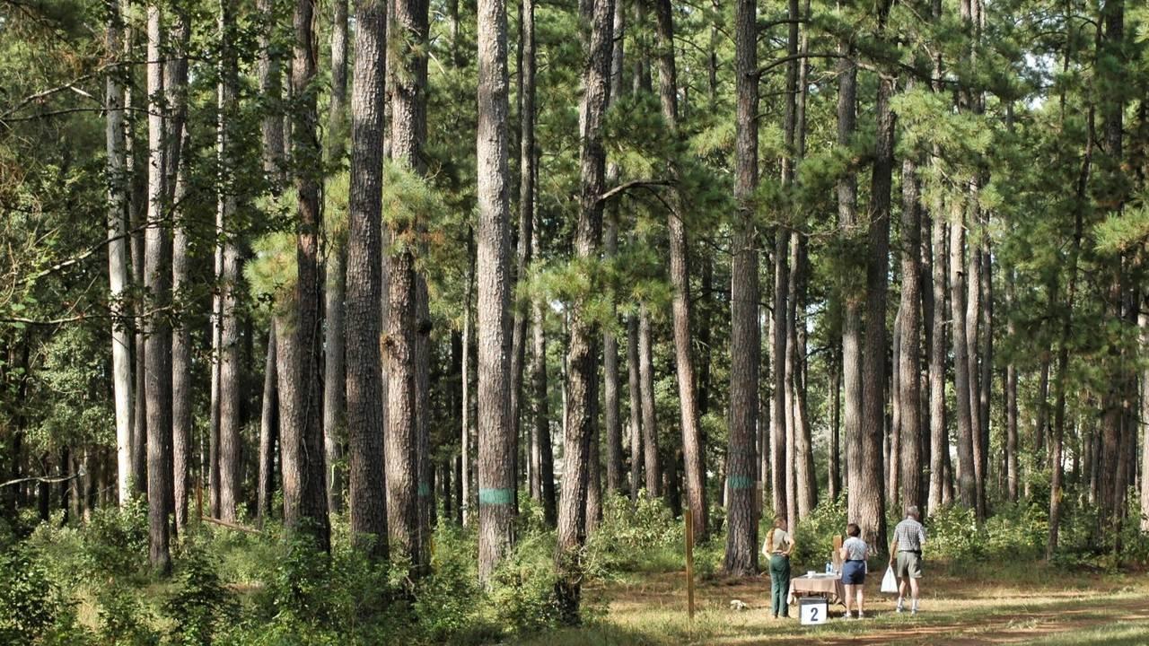 W. Goodrich Jones State Forest