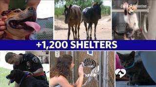 Clear the Shelters 2018 special on KPRC2