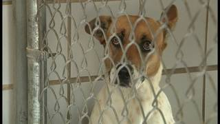 Animal Care Services in desperate need of dog food, newspaper and litter