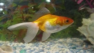 When cuddles kill: Little boy accidentally kills goldfish after&hellip&#x3b;