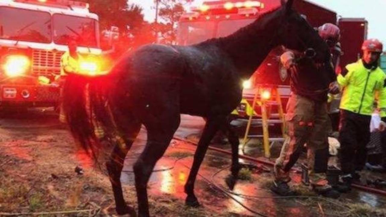 Horse pulled from septic hole2 (1)_1542590351655.jpeg.jpg
