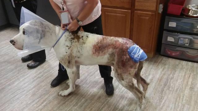 Burned dog at St. Francis