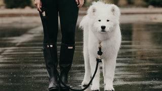 Ladiesman.Leo, Ann Arbor's own canine celebrity