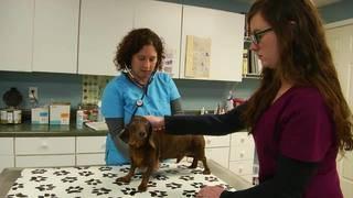 Bill that could affect veterinarians prescribing opioids moves forward