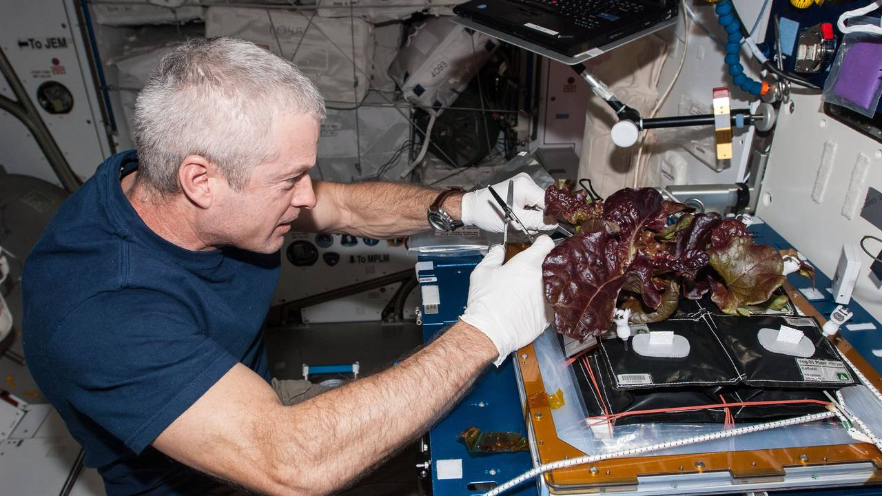 NASA ISS food, veggie station75709348-75042528