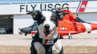 Memorial service planned for beloved Michigan airport dog