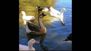 Images: Eden Duck Pond