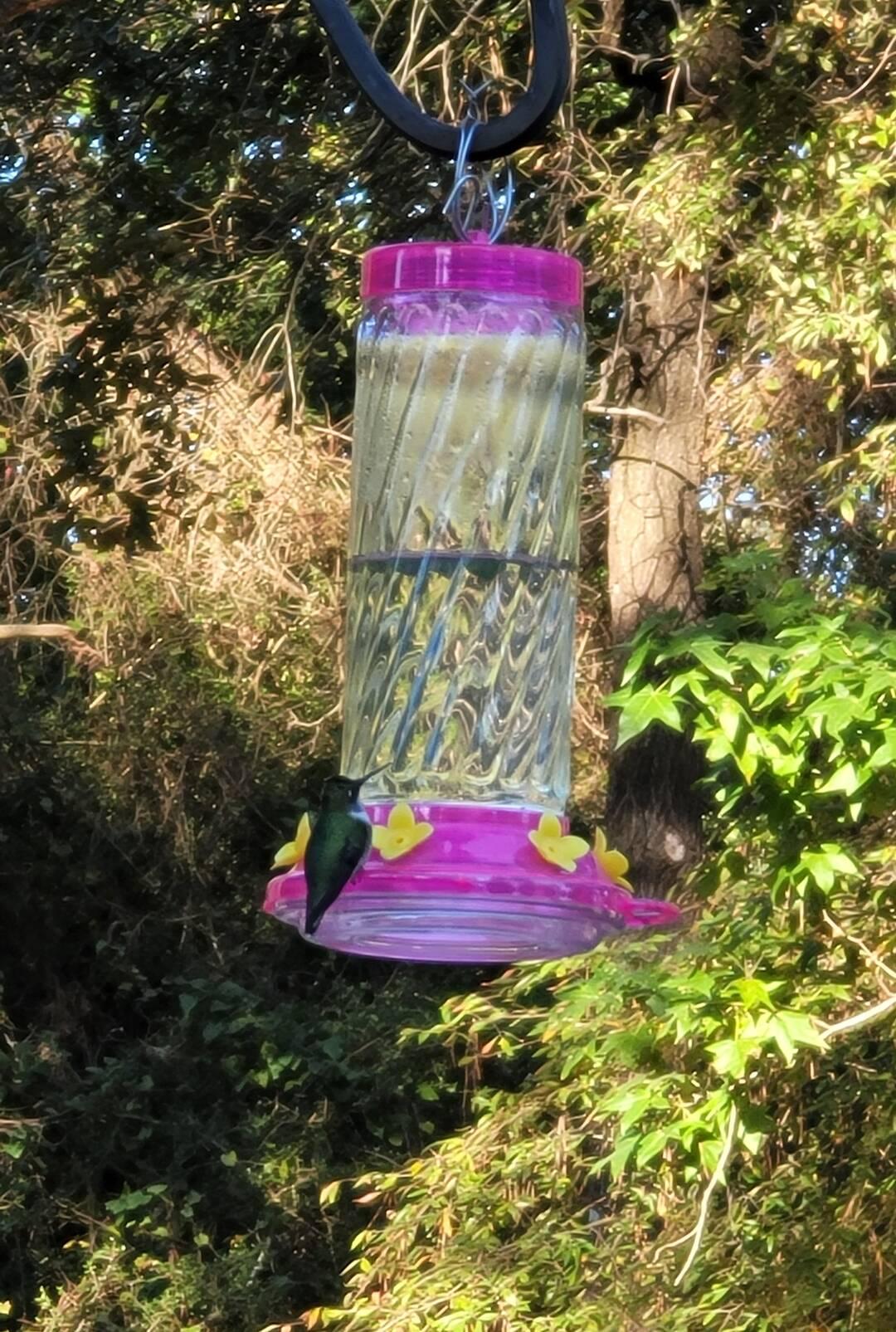 Morning Joe with the Hummingbirds