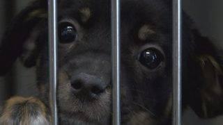 Southside, Pennsylvania nonprofit rescue 33 puppies despite snowstorm
