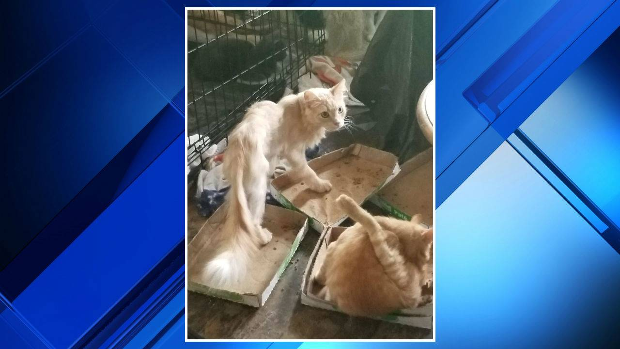 Cats rescued from Southwest Detroit home 3