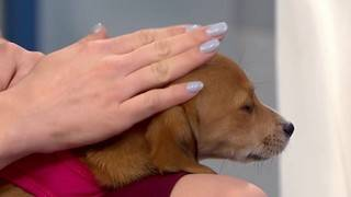 Pets of the Week: Maggie and Mikey