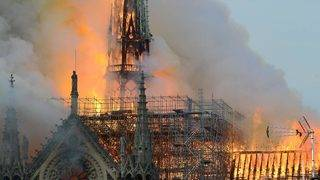 Nearly 200,000 Bees Reportedly Survived Notre Dame Blaze