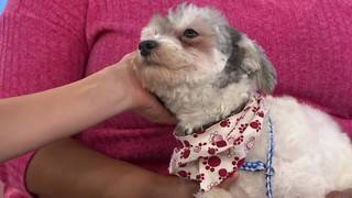 Pet of the Week: Syndey needs a home