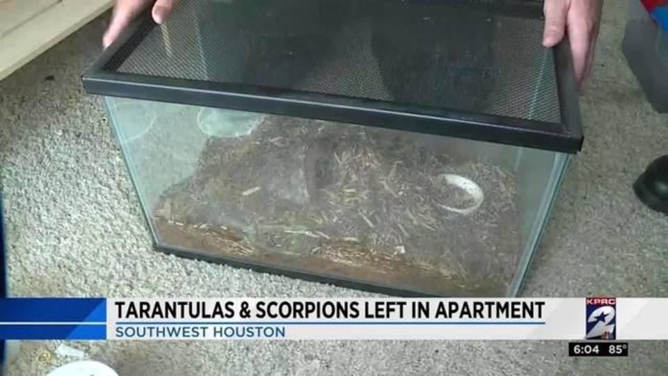 Tarantulas, scorpions left in apartment20170627231821.jpg