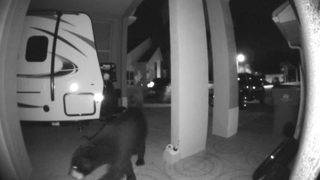 Caught on video: Bear snoops around Clermont home