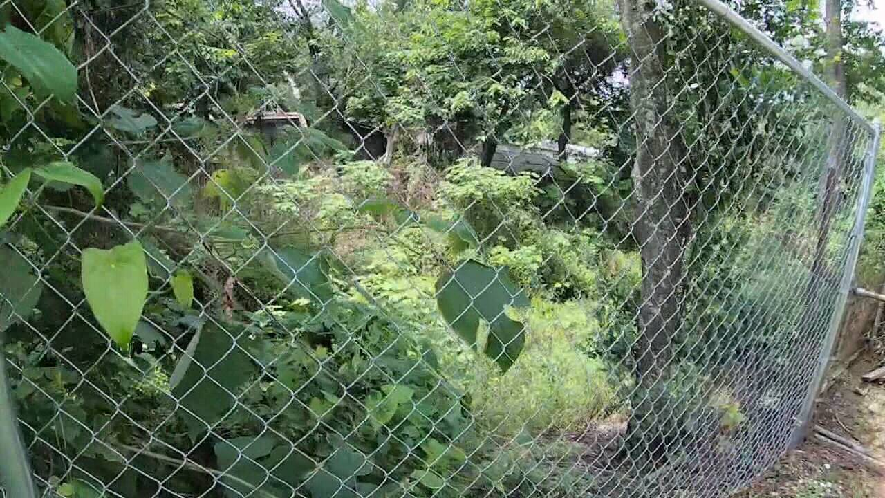 Overgrown ditch 2_1568309699680.jpg.jpg