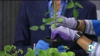 Create Your Own Veggie Garden