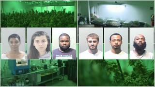 6 charged after 1,000 marijuana plants seized in massive drug