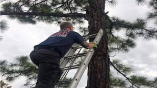 Cat rescued safely from tree in Margate