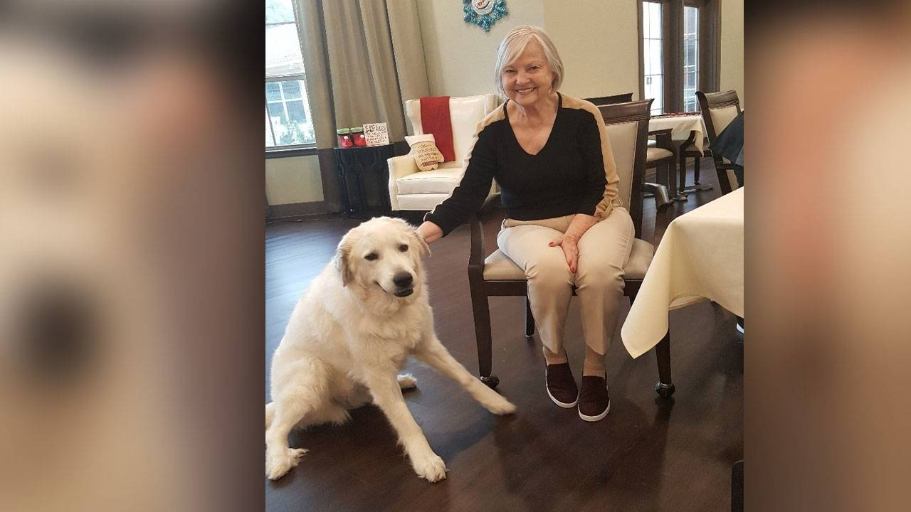 894ef03b2f10 Great Pyrenees rescue dog helps patients at Franklin Park Alamo Heights