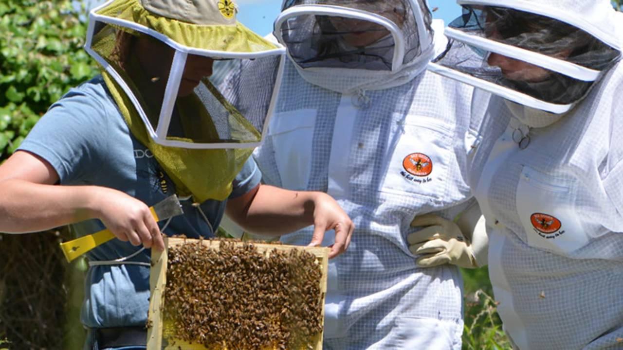 Beeweaver Honey Farm_1558546638620.jpg.jpg