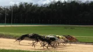 Greyhound owners sue Florida over anti-dog racing measure on November ballot